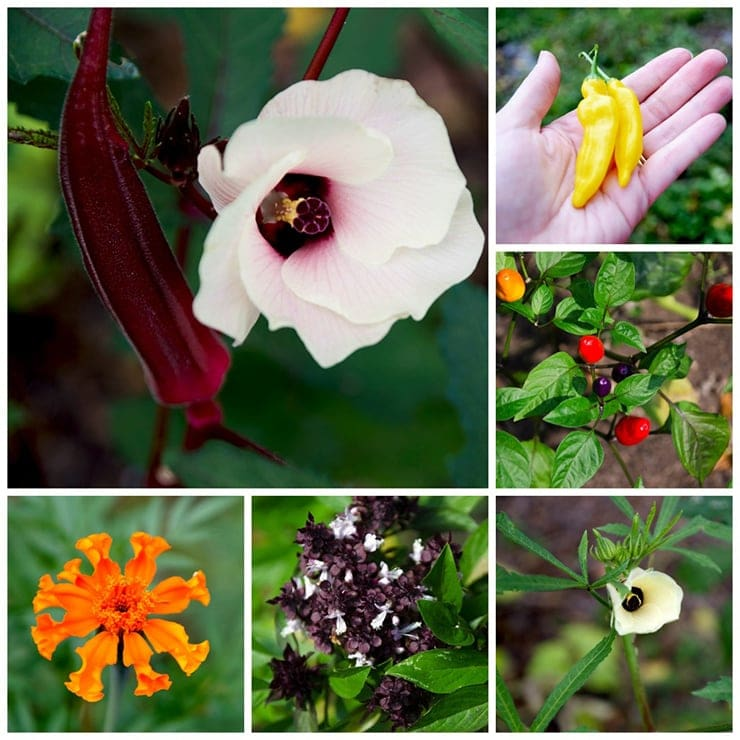 collage of vegetable flowers and fruits