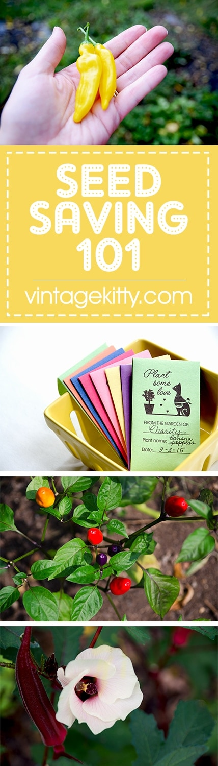 If you've ever wanted to save your own seeds, these Seed Saving 101 tips and cute envelopes will get you started on next year's garden! | vintagekitty.com