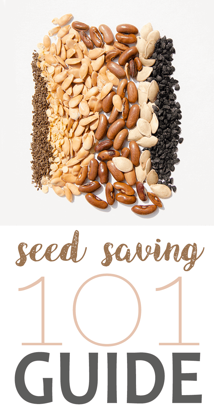 Seed Saving Pin - Seed Saving 101