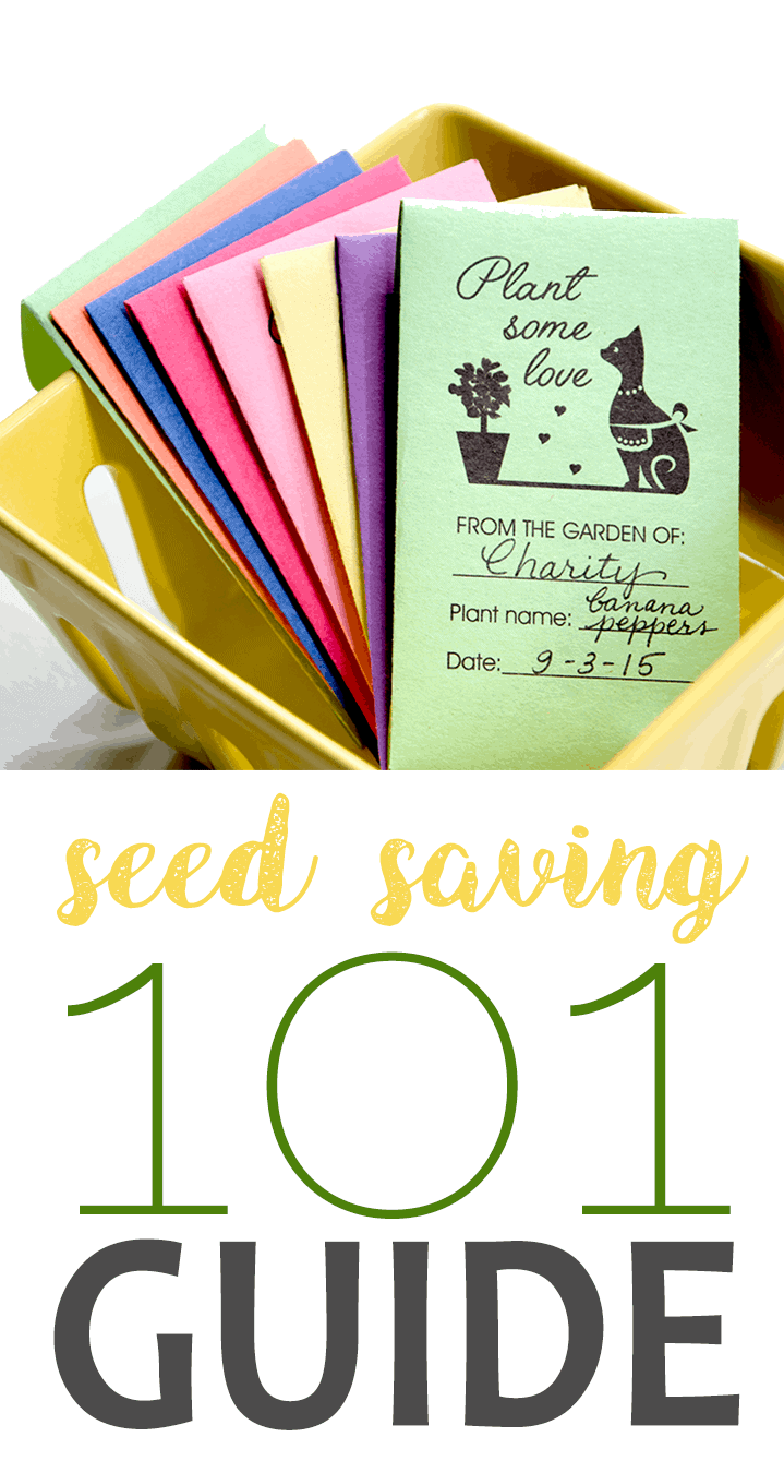 If you've ever wanted to save your own seeds, these Seed Saving 101 tips will get you started on next year's garden! #gardening #victorygarden #seeds #vegetablegarden #gardeningtips