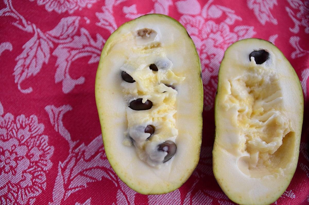 Shenandoah Pawpaw Web - Creamy Vegan Pawpaw Smoothie