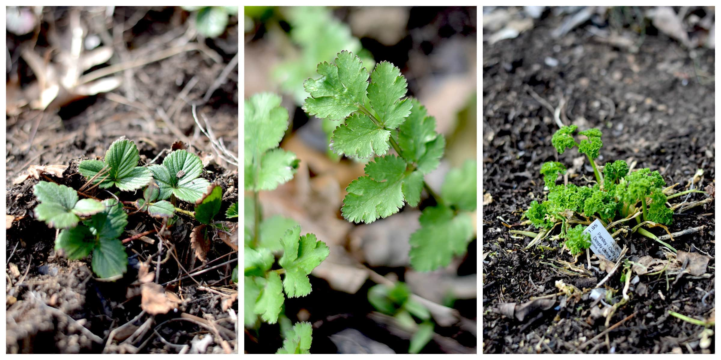 Spring Collage 3 - Seed Starting Tips for Heirloom Vegetable Gardeners