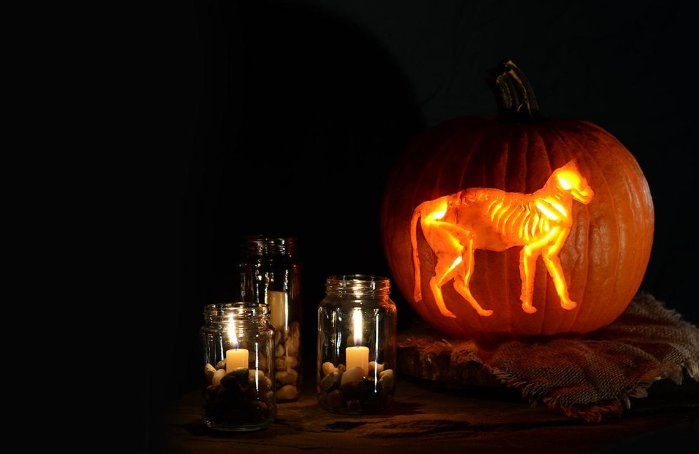 Skeleton Cat Printable Pumpkin Carving Pattern Vintage Kitty