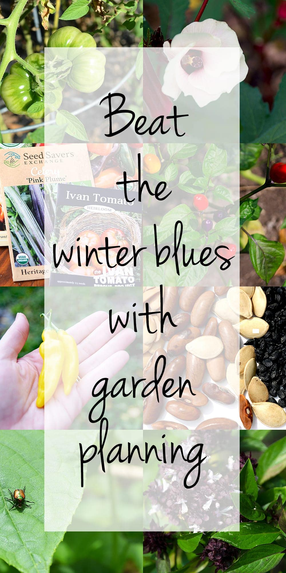 Vertical Seed Collage with Overlay - Beat the winter blues with garden planning