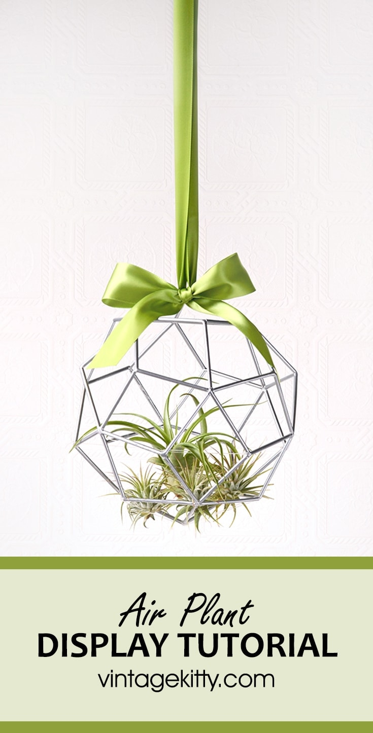 Learn how to make an air plant display with our Earth Day themed #diydatenight. Tillandsia is a fun household plant that is easy to care for. Get our tips!
