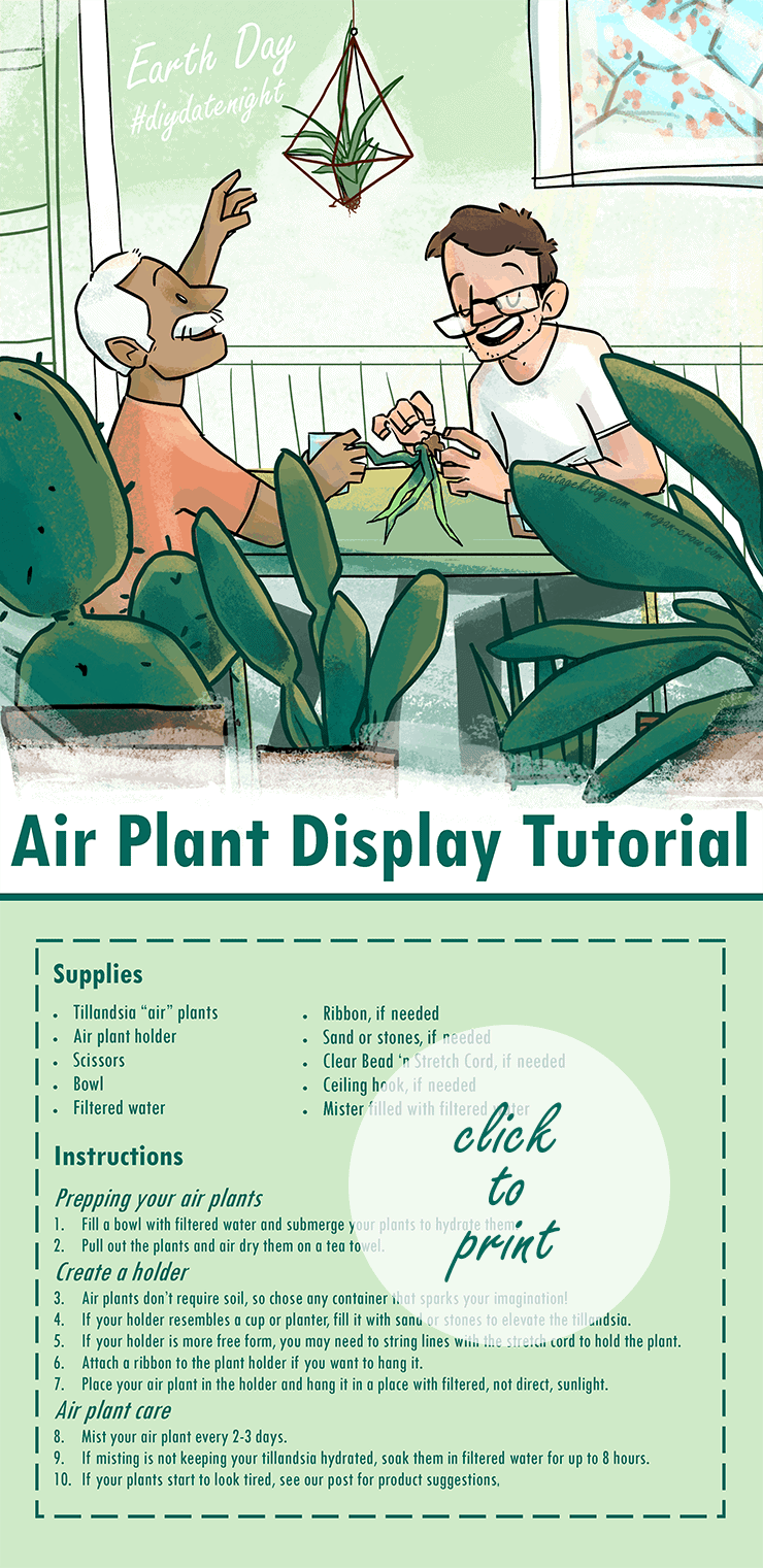 Air Plant Tutorial Web 2 - Earth Day #diydatenight