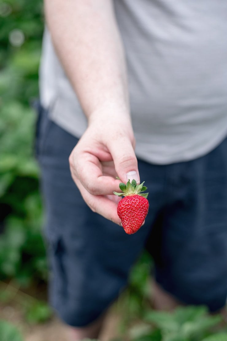 man holding a ripe strawberry