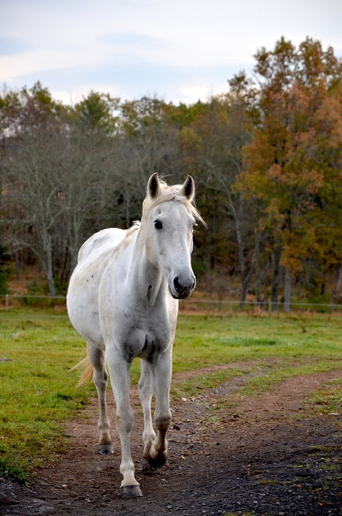 Horse at Patriots Place Web 678x1024 - Charity Beth Long Photography Portfolio