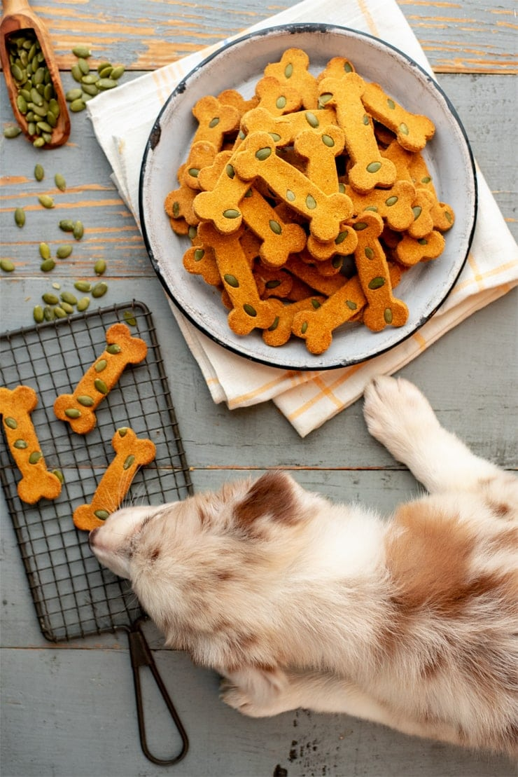 Pumpkin Spice Dog Treats 0687 Web - Pumpkin Spice Dog Treats     ***Gluten Free!***
