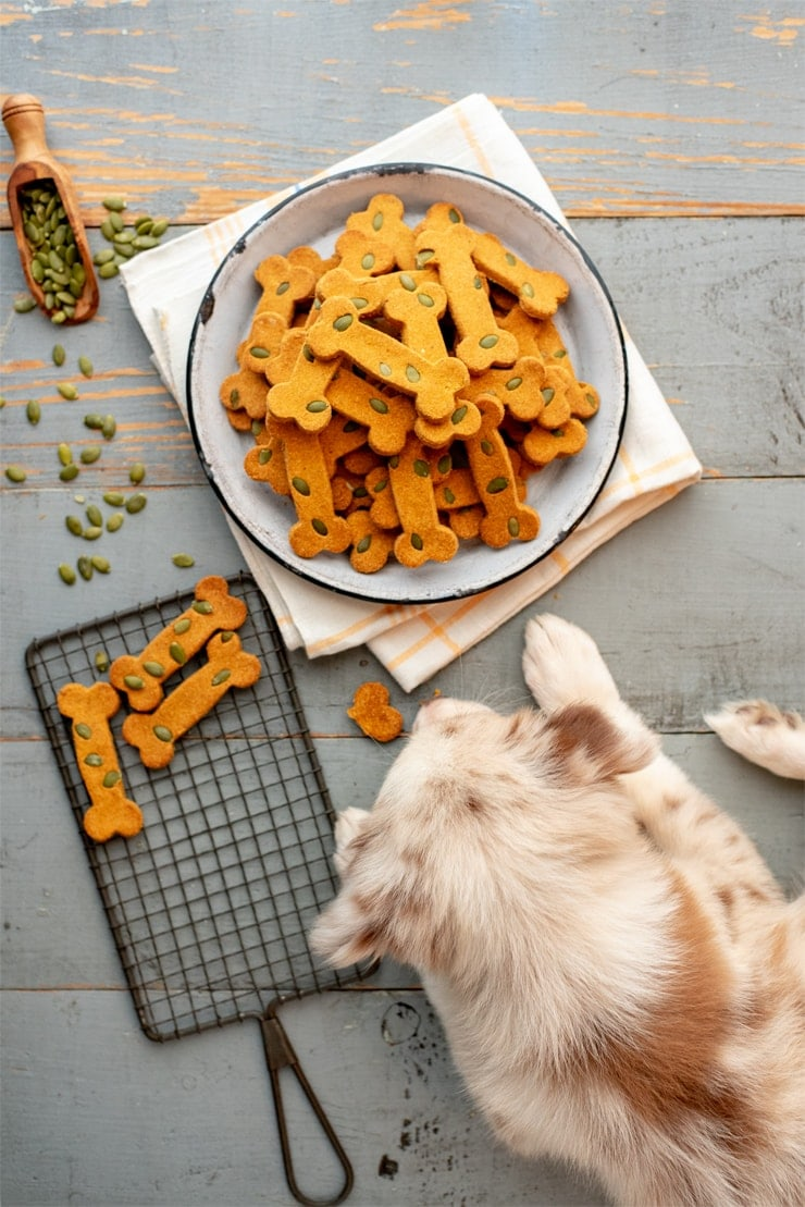 Pumpkin Spice Dog Treats  0656 Web - Pumpkin Spice Dog Treats     ***Gluten Free!***