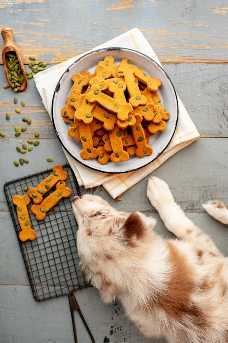 Pumpkin Spice Dog Treats  0659 Web - Pumpkin Spice Dog Treats     ***Gluten Free!***