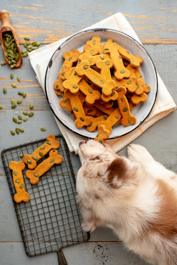 Pumpkin Spice Dog Treats  0666 2 Web - Funfetti Bacon Cheddar Pupcakes