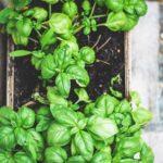 markus spiske unsplash 740 150x150 - Ten Tips on How to Stretch Your Food Resources